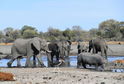 Botswana reports mysterious deaths of hundreds of elephants.